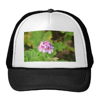 Wild Pink Geranium. Trucker Hat