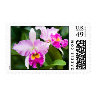 Wild Pink Orchid Stamp