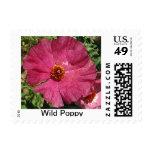 Wild Pink Poppy Postage Stamp