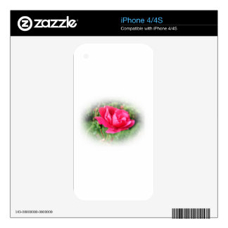 wild pink rose flower iPhone 4 decal