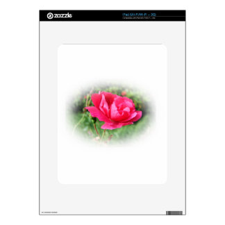 wild pink rose flowers decals for the iPad