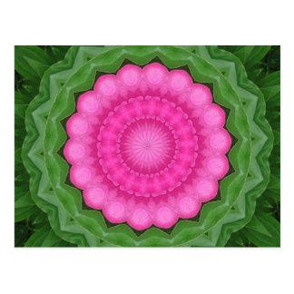 Wild pink rose of India pattern Postcard