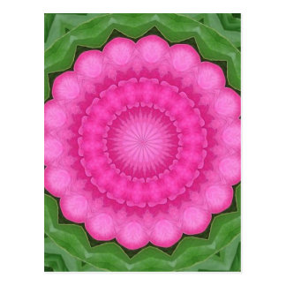 Wild pink rose of India pattern Postcard