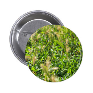 Wild plants in the meadow grass pinback button