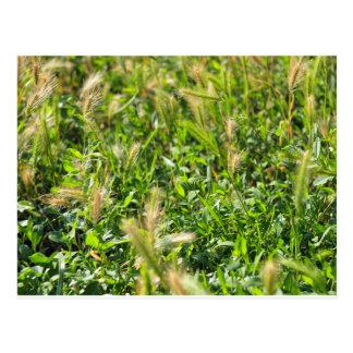 Wild plants in the meadow grass postcard