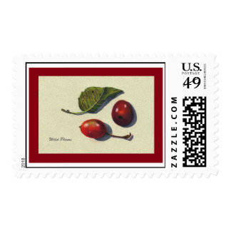 Wild Plums: Still LIfe in Color Pencil Postage Stamp