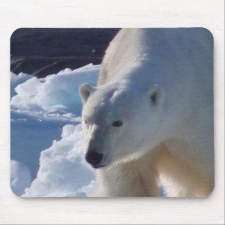 Wild Polar bear in Svalbard, (Spitsbergen) Mouse Pad