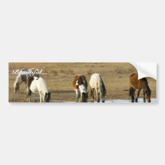 Wild pony bumper sticker