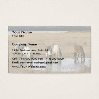 Wild pony business card