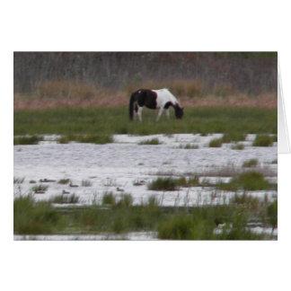 Wild Pony of Assateague Island, VA Card