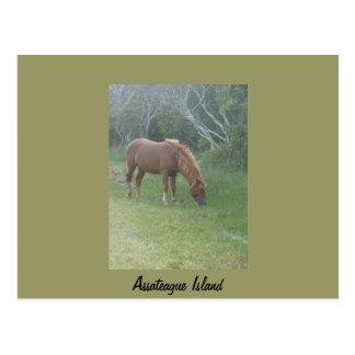 Wild Pony of Assateague Postcard