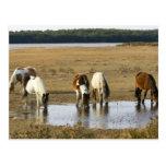Wild pony post card