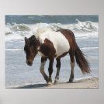 Wild Pony Poster Print