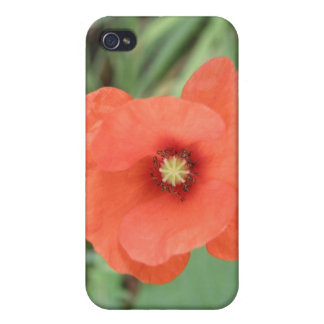 Wild Poppy Flower  Covers For iPhone 4
