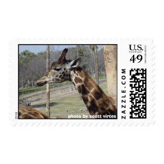 Wild Postage - Giraffe