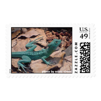 Wild Postage - green lizard
