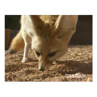 Wild Postcard - Fennec