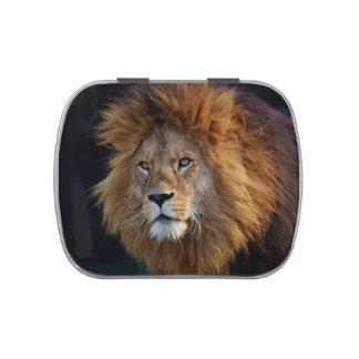 Wild Predator Lion with Mane Candy Tins