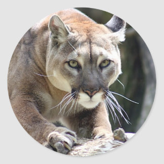 Wild Puma Classic Round Sticker