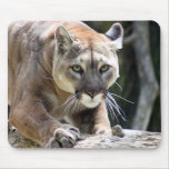 Wild Puma Mouse Pad