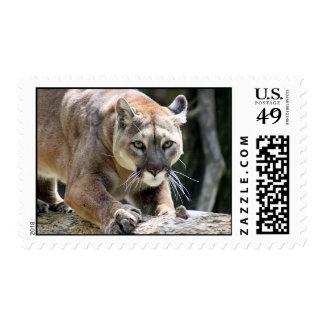 Wild Puma Postage