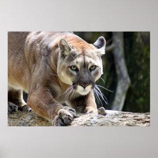 Wild Puma Poster