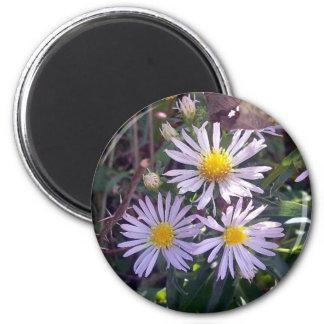Wild Purple Daises Magnet