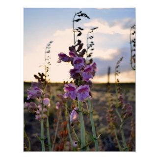 Wild Purple Snapdragons photo print