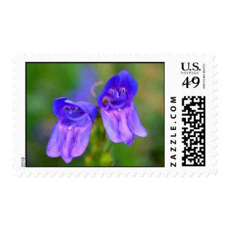 Wild Purple Snapdragons stamps