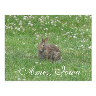 Wild Rabbit Ames, Iowa Postcard