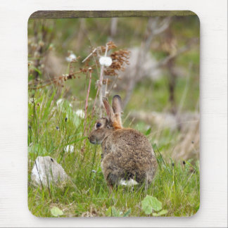 Wild Rabbit at Druridge Bay Northumberland Mouse Pads