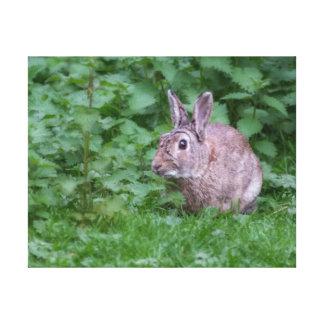 wild rabbit bunny photograph canvas print