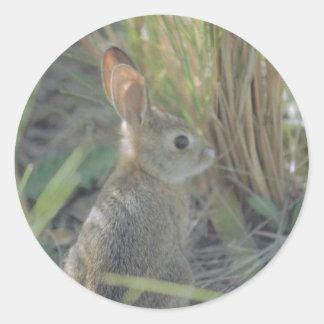 Wild Rabbit Classic Round Sticker