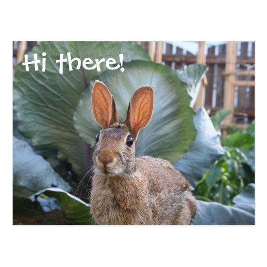 [Wild Rabbit] Cute Bunny in Garden Any Occasion Postcard
