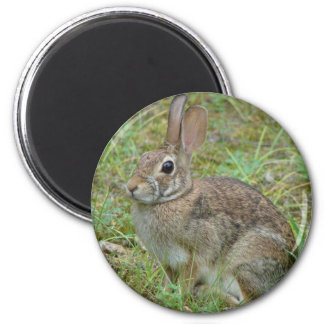 Wild Rabbit Eastern Cottontail II Apparel & Gifts 2 Inch Round Magnet