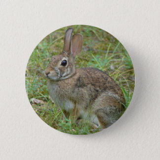 Wild Rabbit Eastern Cottontail II Apparel & Gifts Button