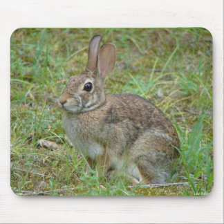 Wild Rabbit Eastern Cottontail II Apparel & Gifts Mouse Pad