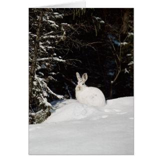 Wild Rabbit In Snow Card