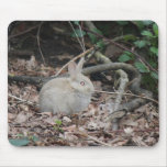 Wild rabbit in the woods mouse mats