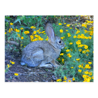 Wild Rabbit in Yellow Flowers Postcards