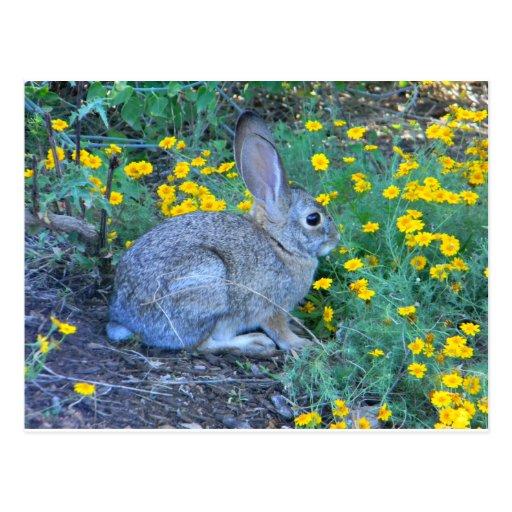Wild Rabbit in Yellow Flowers Postcard