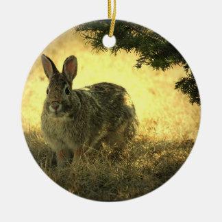 Wild Rabbit Photo Ornament
