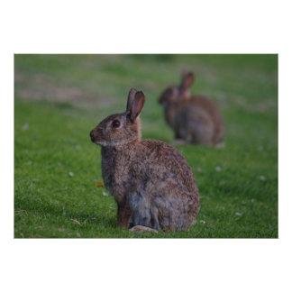 Wild Rabbit Art Photo