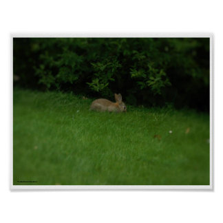 Wild Rabbit - poster