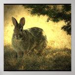 Wild Rabbit Poster Print