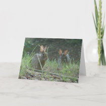 Wild Rabbits Eastern Cottontail Pair Apparel Gifts Holiday Card