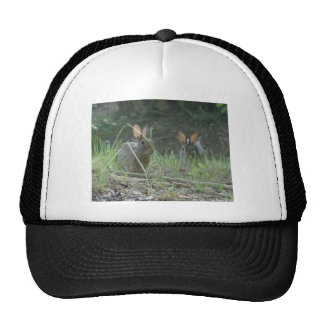 Wild Rabbits Eastern Cottontail Pair Apparel Gifts Trucker Hat