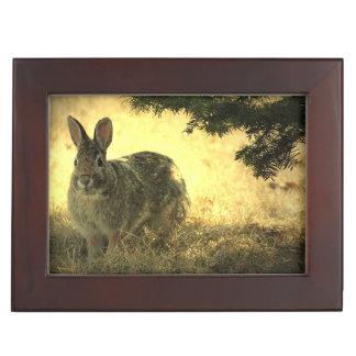 Wild Rabbits Keepsake Boxes
