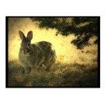Wild Rabbits Postcard