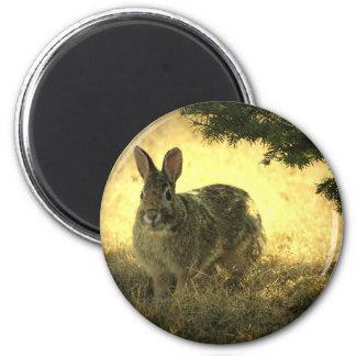 Wild Rabbits Round Magnet Refrigerator Magnet